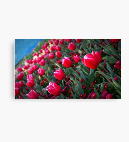 Rising Tulips Canvas Print