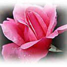 Rose Dreams by cdfletcher