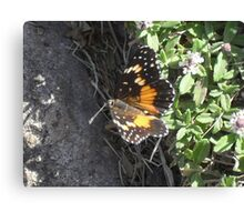 Butterflies Work in Triple Digits Canvas Print