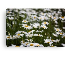 Blowing In The Wind Canvas Print