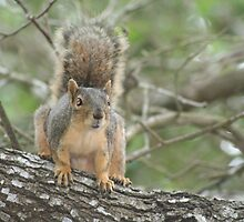 Mad Squirrel by terrilynn