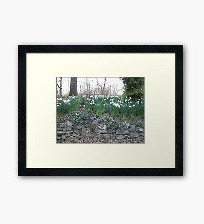 blue springs flowers Framed Print