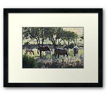 Wild Horses 3417 Framed Print