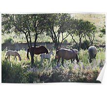 Wild Horses 3417 Poster