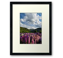 Lupin Field Framed Print