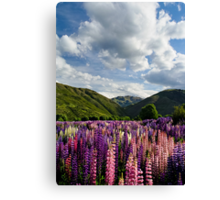 Lupin Field Canvas Print