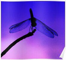 Dragonfly at Dusk Poster