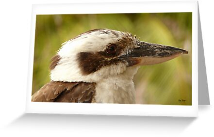 KOOKABURRA-SOLDIERS POINT PORT STEVENS by Wayne Dowsent
