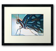 Floridian Butterfly Framed Print