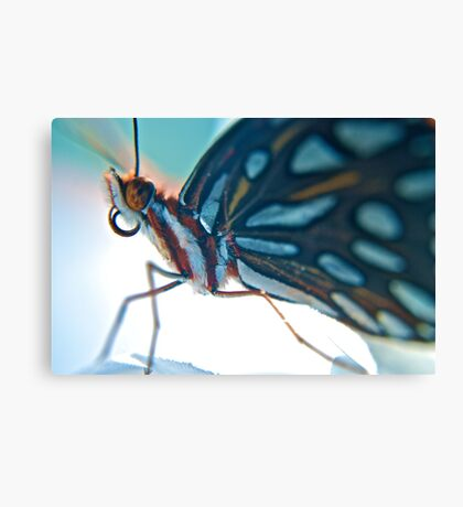 Floridian Butterfly Canvas Print
