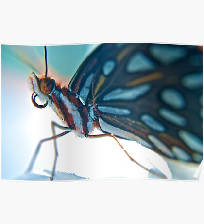Floridian Butterfly Poster