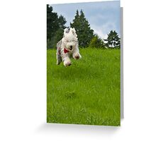 Look! I'm Flying!! Greeting Card