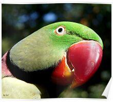 GREEN PARROT-CAIRNS AUSTRALIA Poster