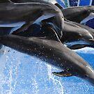 Seaworld dolphin show  by yamiyalo
