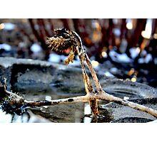 spines 2 Photographic Print