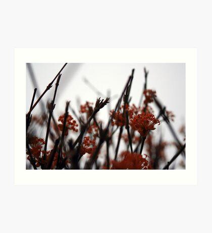 red buds Art Print