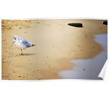 Baby Seagull Pondering Life Poster