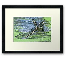 Playing Fetch Framed Print