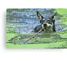 Playing Fetch Canvas Print