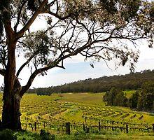 Vineyard Landscape in Springtime by John Wallace