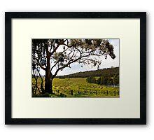 Vineyard Landscape in Springtime Framed Print