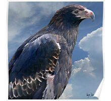 WEDGE- TAILED EAGLE-TASMANIA  Poster