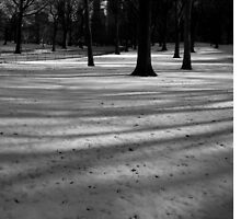 fresh snow, central park, nyc by tim buckley | bodhiimages