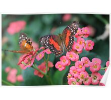 Pink Flowers and Orange Butterflies Poster