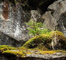 Miniature landscape in Johnston Canyon, Banff by Sandra Johnston