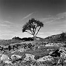 Lone Tree  by spiritoflife