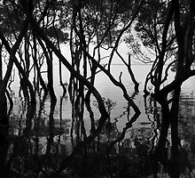Moreton Bay Mangroves by Renee Hubbard Fine Art Photography