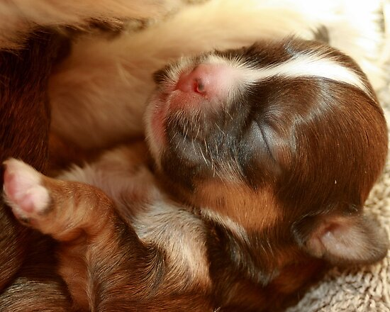 I am 3 days old!!!! by Susanne Correa