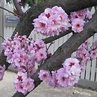 Blossom by Julietmsampson