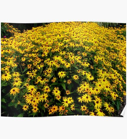 A Sea of Yellow Sunshine Poster