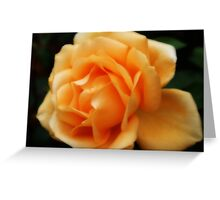 Golden Peach Rose ~ The Orton Effect ~ Greeting Card