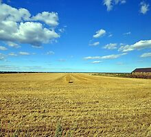 Harvested field Marske by the sea by robwhitehead