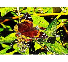The Butterfly Photographic Print