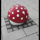 Mushrooms of Newport by Tim Topping