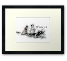 Elephant Seal Sketch Framed Print