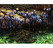 """Mysterious Sea-Life"" Photographic Print"