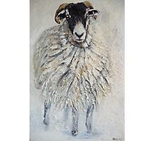 Swaledale Ewe Photographic Print