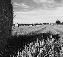 {Hay Bales in Bedfordshire} by Paul Smith