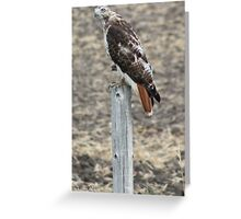 Red Tail Greeting Card
