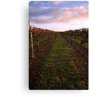 Vineyard at Dawn 2 Canvas Print