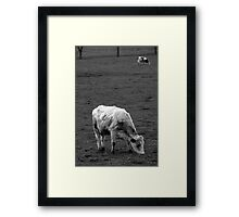 The cows Framed Print