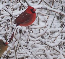 Love in the Winter - Pair of Cardinals in Snowy branches by Hope Grover