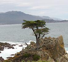 Lone Cypress Tree  by kimmypncal