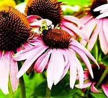 Bumble Bee by ericafaye