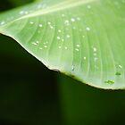 Leafy Green by ericafaye