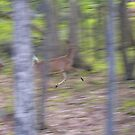 Running Deer by Imagery